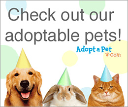 View Our Adoptable Pets